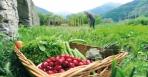 1,321,000 ευρώ για Βιολογικές Καλλιέργειες στην Ήπειρο 28/02-28/03 οι αιτήσεις