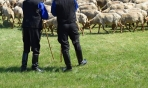 Απαγόρευση βοσκής από Παλιουριώτικο Κ. Αθαμανίου μέχρι Δάσος Μελατών